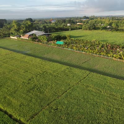 Land for Sale in Mueang Lamphun, Lamphun - Garden house with warehouse for agricultural production
