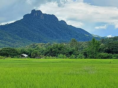 Land for Sale in Mueang Pan, Lampang - Land with a million dollar view, next to the mine, close to nature see the mountains