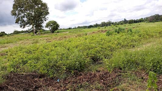 Home for Sale in Chuen Chom, Mahasarakham - vacant land