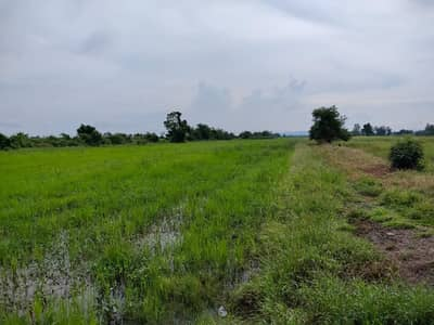 Land for Sale in Sapphaya, Chainat - Beautiful plot of land for sale in Chainat province.