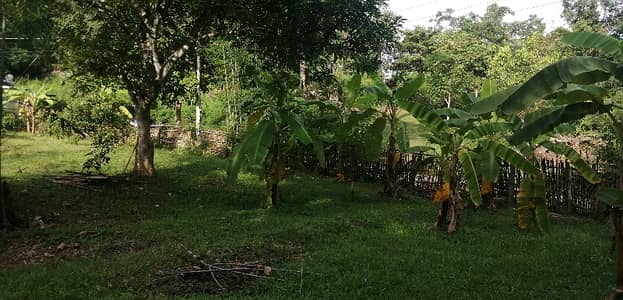 Land for Sale in Mae On, Chiangmai - Good location land near Super Highway, Mae Tha Lamphun District.