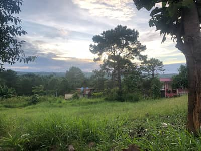 Land for Sale in Khao Kho, Phetchabun - Land at Khao Kho, Thung Samo, windmill view