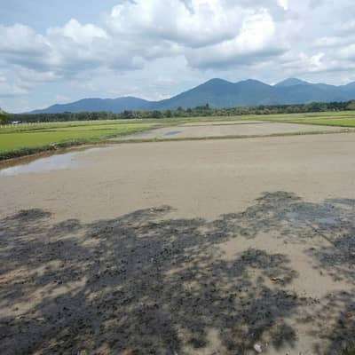 Land for Sale in Na Yong, Trang - Land for sale 5 rai 90 square wa, Na Khao Si Subdistrict, Na Yong District, Trang Province, near the Napod market area, rice field, price can be discussed. If interested, contact 0916407103