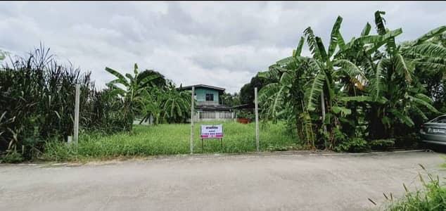Land for Sale in Thanyaburi, Pathumthani - Land for sale in Khlong 8, Rangsit, 50 sq m, next to concrete road, has electricity, complete water supply, near the community suitable for building a house