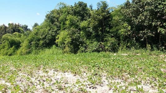 Land for Sale in Dan Sai, Loei - Beautiful land for sale in a deed of 26 rai 2 ngan 38 square wa, Phu Ruea District, Loei Province. Located in a village next to tourist attractions, high agriculture and waterfalls, the land is a hill, the view is very beautiful, can be used as a resort h