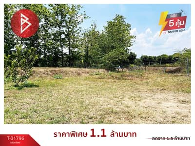Land for Sale in San Pa Tong, Chiangmai - Land for sale with orchards, 1 rai 1 ngan, 40.0 square wah, San Pa Tong, Chiang Mai.