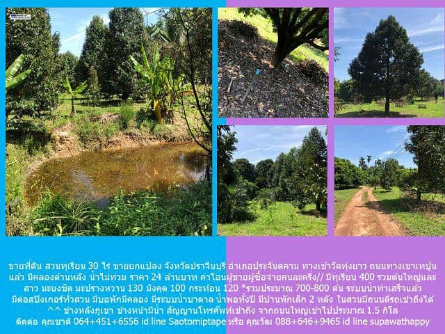 Land for sale with orchards.