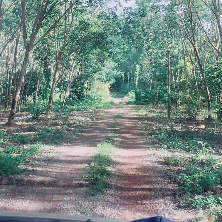 Land for sale 195 rai, surrounded by mountains, Klaeng District, Rayong Province