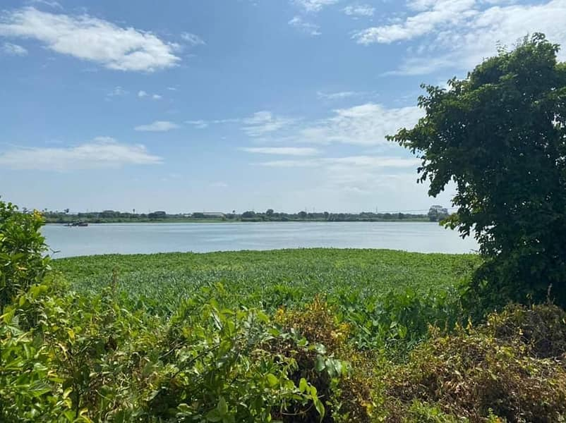 Land for sale along the Chao Phraya River.