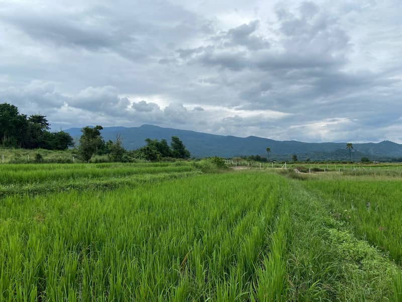 Doi Inthanon view land for sale urgently.