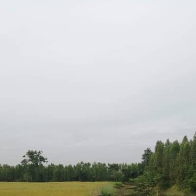 1 Bedroom Land for Sale in Ban Dung, Udonthani - Land for sale Baan Dung Udon Thani 19 Rai