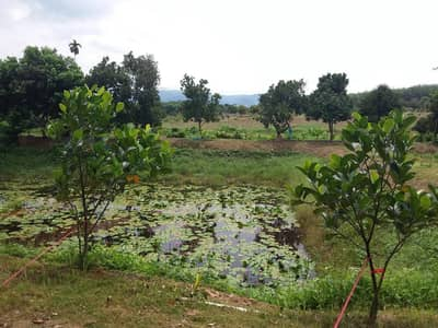 Land for Sale in Klaeng, Rayong - Beautiful land, Klaeng District, Rayong, two plots, 14 rai 1 ngan 66 square meters, quick sale of 6.5 million baht