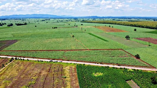 Land for Sale in Nong Muang, Lopburi - Title deed on the black road, 1-2 rai per plot