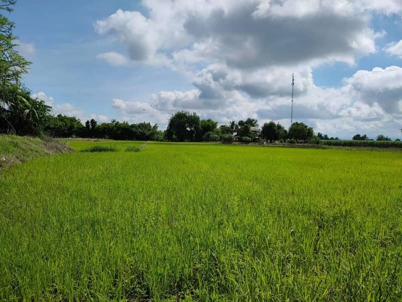 Land for sale 5 rai, good location, near the city. Near tourist attractions, next to the Huai Pong Subdistrict Administrative Organization