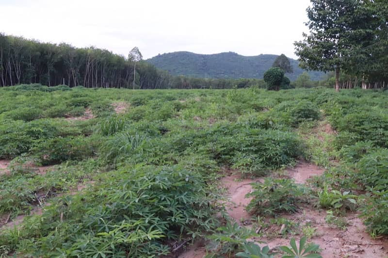 Land for sale in Rayong