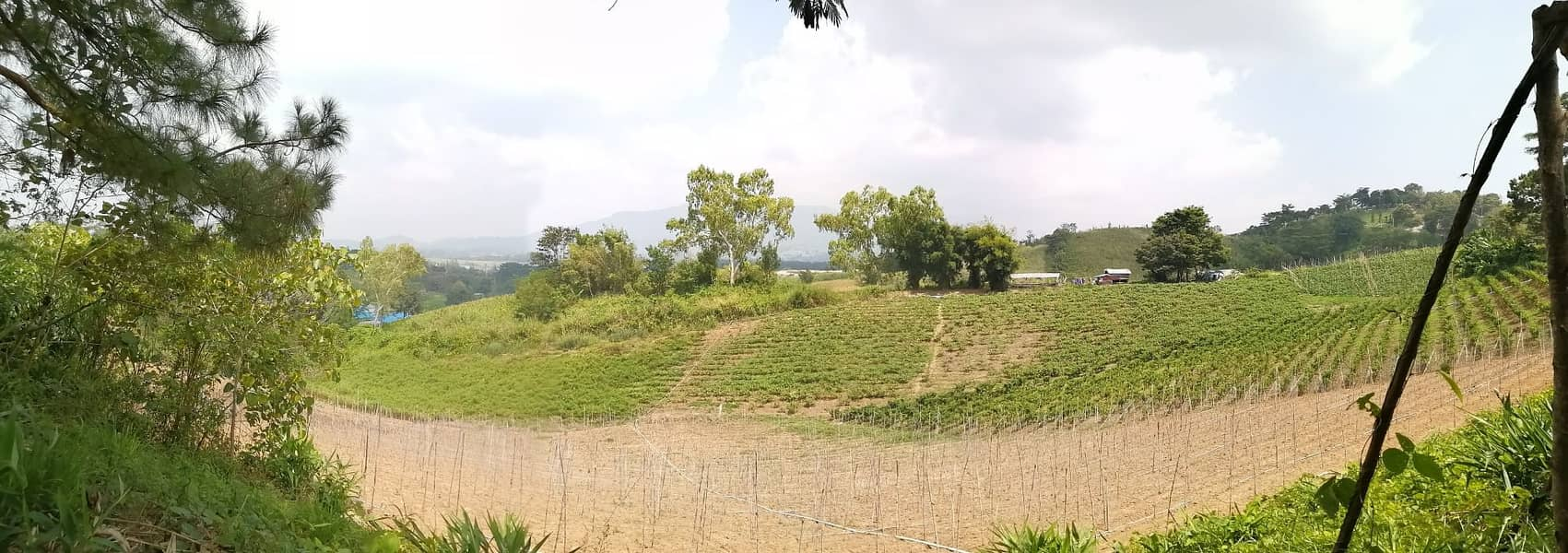 Land for sale in Khampson Subdistrict, Khao Kho District, next to a slope road, beautiful view, good atmosphere, 7500 per square meter