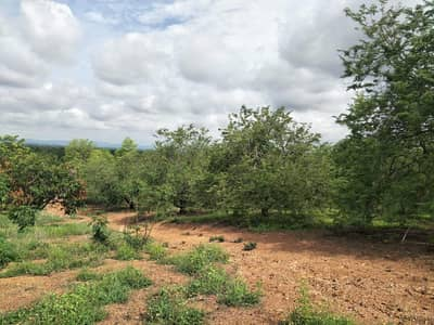 Land for Sale in Bueng Sam Phan, Phetchabun - Land 9 million