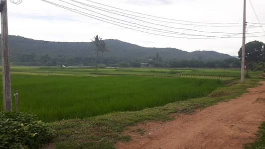 Land for Sale in Mae Tha, Lamphun - Beautiful land with mountain views next to the Mae Tha River