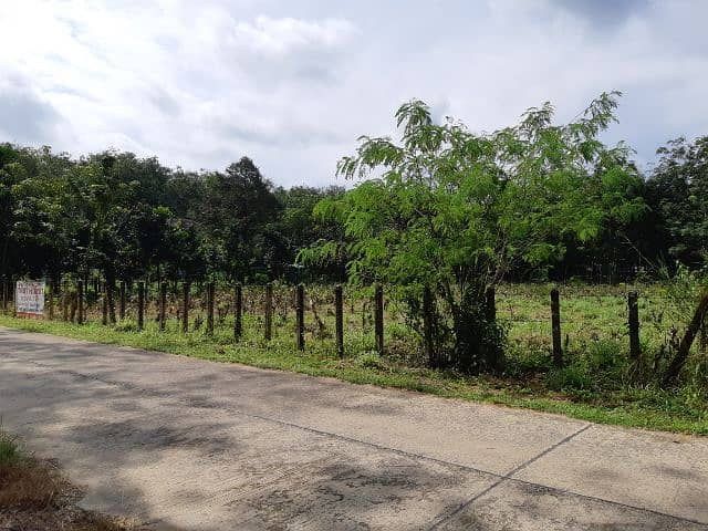 Land for sale Suitable for people who escape the hustle and bustle, love peace, love nature, electricity, public road access, 3 km from Natai Beach, 7 km from the town of Khok Kloi (no brokerage), the owner sells himself.