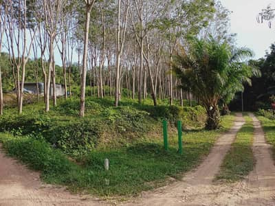 Land for Sale in Ko Lanta, Krabi - Freehold Rubber Tree garden for sale  included 220 trees, 3 Rais 2 TRW