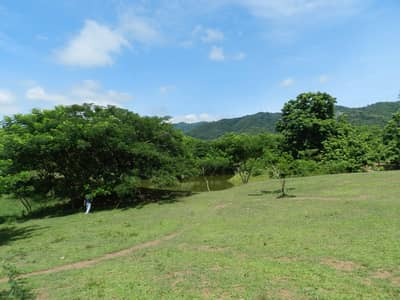 Land for Sale in Mueang Phetchabun, Phetchabun - Land on the hill is very beautiful and shady.