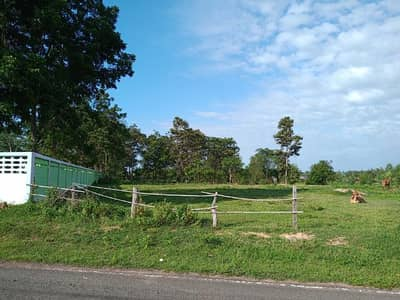 Land for Sale in Wapi Pathum, Mahasarakham - Land for sale 1 rai next to Ngua Ba Wittayakhom School Suitable for building houses, repair shops, grocery stores from 4-lane highways, about 250 meters deep, with water supply, electric village passes near AIS telephone poles, dtac telephone poles, 3BB s