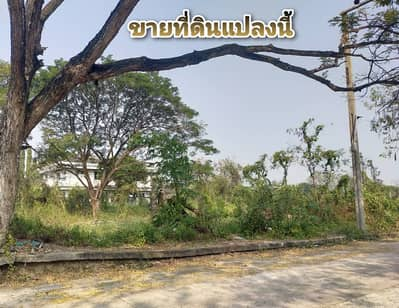 Land for Sale in Bang Khae, Bangkok - Land for sale 300 sq m. Arun Soontree Phutthamonthon Sai 2 - Bang Waek
