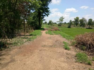 Land for Sale in Taphan Hin, Phichit - Selling cheap land, beautiful plot, can be farmed all year round