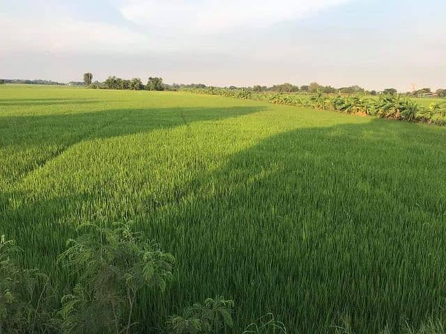 4 rai of land for sale on the road