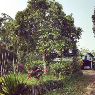 3 Bedroom Home for Sale in Wang Nam Khiao, Nakhonratchasima - House for sale with 35 rai of land in Wang Nam Khiao district. Resort atmosphere One of the best ozone places in Thailand let's have a look.