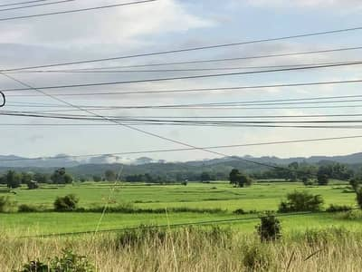 Land for Sale in Tha Li, Loei - Land for sale in rice fields, mountains, next to the canal and highway, Tha Li District