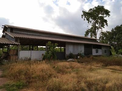 Commercial Building for Rent in Bang Bua Thong, Nonthaburi - Greenhouses for rent
