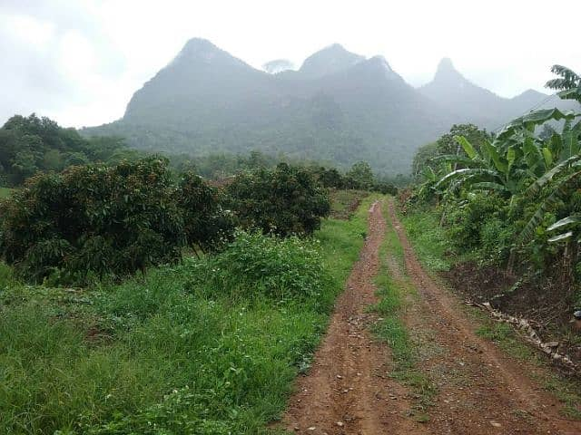 Land for sale, beautiful view. In front of the Chiang Dao cave, Chiang Dao District