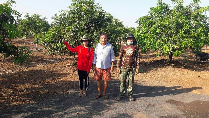 There is a beautiful mango plantation that Prachinburi sells with a valid title deed (in this case, I am a broker).