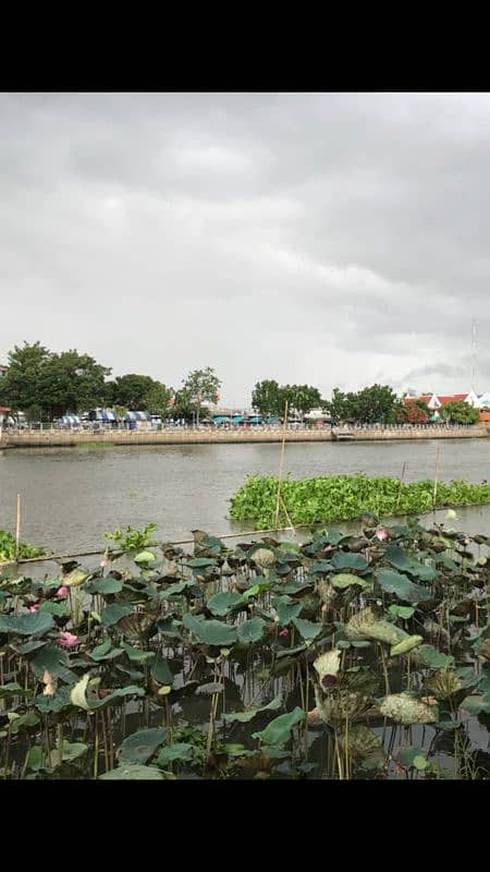Urgent sale of land and buildings. Next to the Nakhonchaisri River