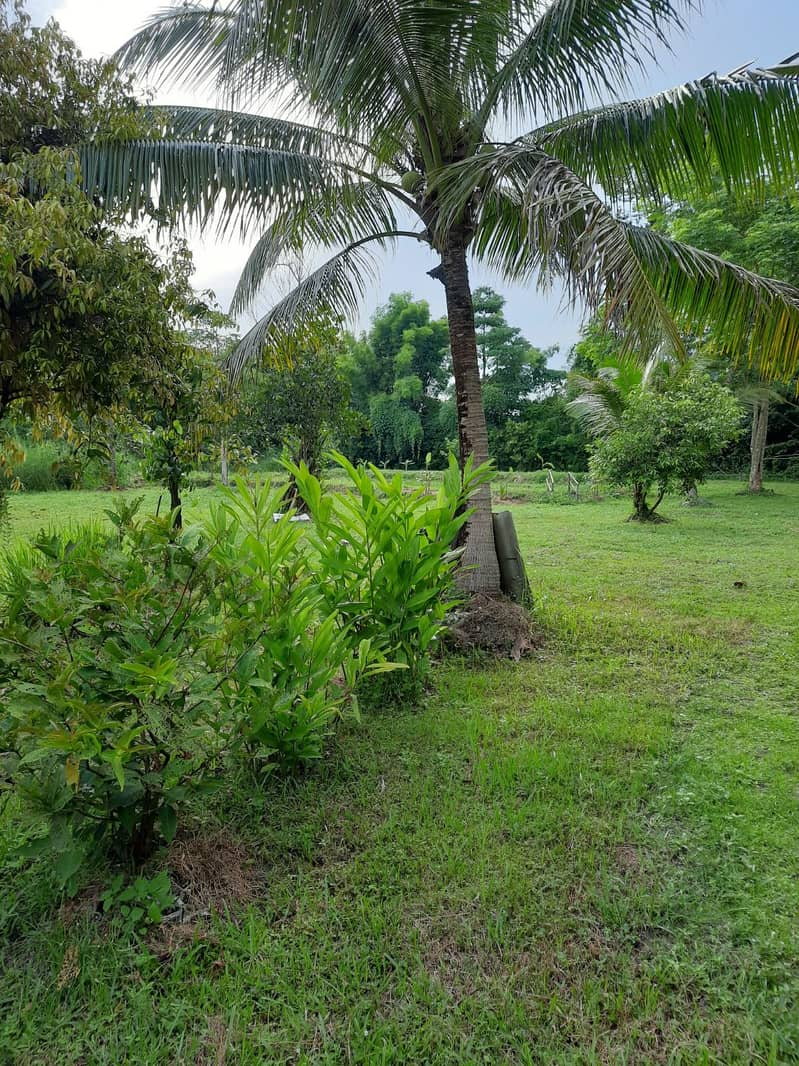 Land title deed 5 rai 2 ngan with houses near Khao Yai, water and electricity, ready without filling.