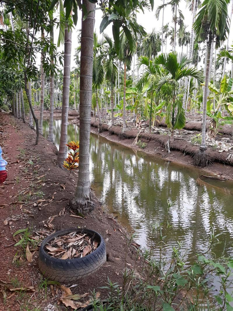 At the riverside of 3 rai, there is a place that grows opposite the Saman Temple of 16 million.