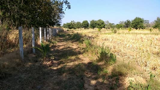 1 Bedroom Land for Sale in Mueang Nong Bua Lam Phu, Nongbualamphu - 40 rai of land with buildings surrounded by barbed wire