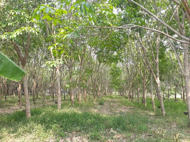 Land for sale in Phu Thok, Chiang Khan District, Loei Province