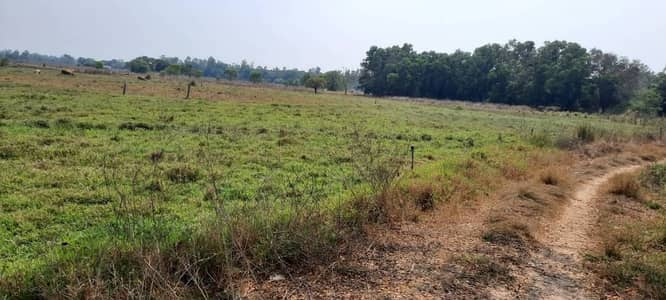 Land for Sale in Ban Khai, Rayong - Land for sale in Ban Khai, Rayong