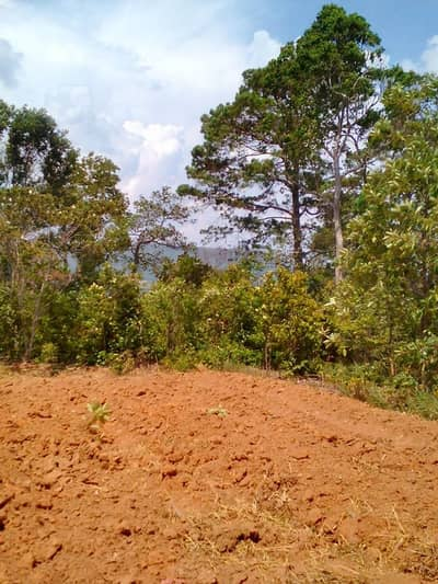 Land for Rent in Mueang Rayong, Rayong - The land is cool all year.