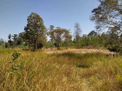 Land for Sale in Mueang Amnat Charoen, Amnatcharoen - Land for sale 33-2-92 rai A. Muang, Amnat Charoen
