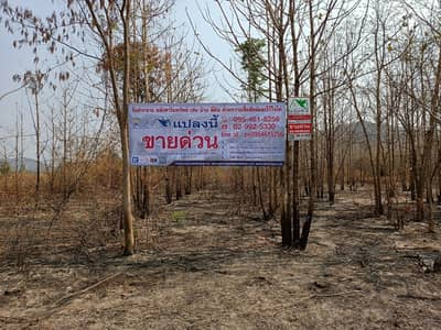 Land for Sale in Tap Khlo, Phichit - Land for sale 52-0-99 rai, large plot, good location,  Tub Khlo, Phichit