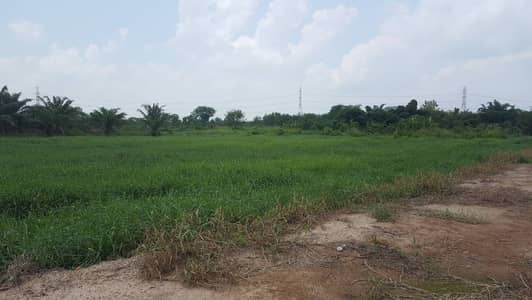 Land for Sale in Ko Chan, Chonburi - Land for sale, title deed of land 50-1-23 rai, Koh Chan, Chonburi, access road at Good location, suitable for farming, house making, speculating garden