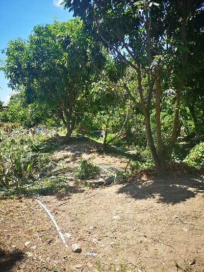 Land for Rent in Taling Chan, Bangkok - Land for sale, total area 222 sq. wa. , Taling Chan, shady land with 1 house, land adjacent to Bang Krachan canal.