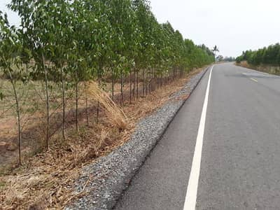 Land for Sale in Watthana Nakhon, Sakaeo - Land on a paved road, area 15 rai, Nong Waeng Sub-district, Watthana Nakhon District Sa Kaeo Province Land next to a paved road, width about 50 meters.