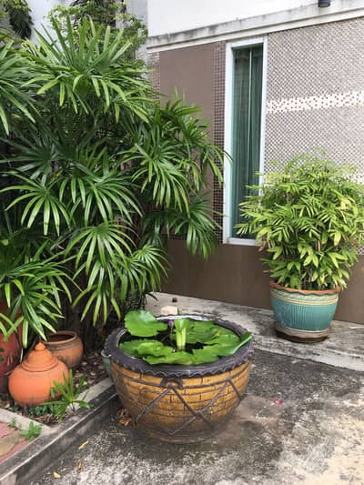 Office for Rent in Si Racha, Chonburi - Home office for rent