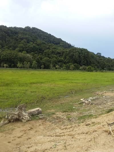 Land for Sale in Mueang Narathiwat, Narathiwat - 3 plots of land imported to Tang Yong