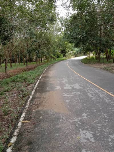 Land for Sale in Ban Khai, Rayong - Land with rubber plantation for sale. Next to a paved road, width 80 meters