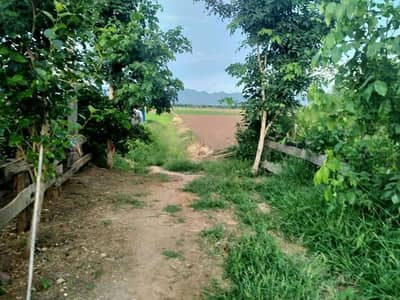Land for Sale in Mueang Phetchabun, Phetchabun - Sales of rice fields next to the road.
